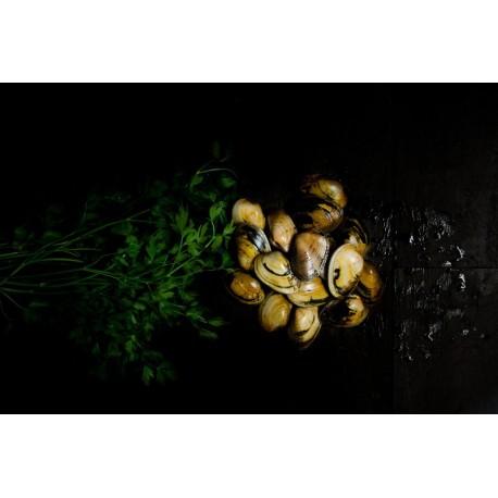 Almeja Babosa (1 Kg) desde